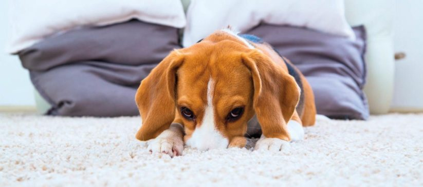Carpet Odour Treatment Northern Beaches
